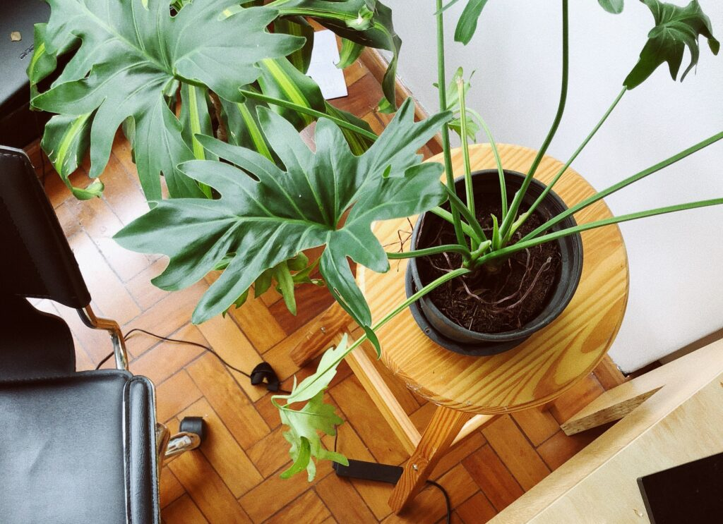 how to make an eco office